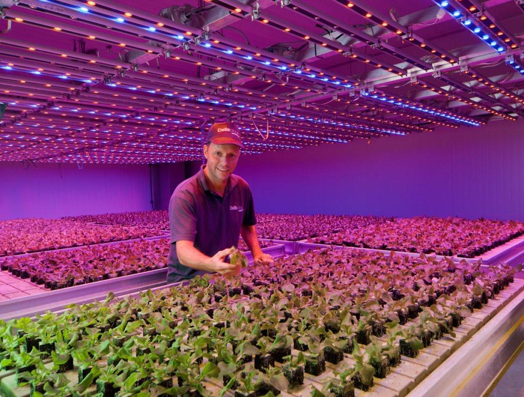 Бизнес-план по выращиванию зелени в теплице: как составить грамотно?