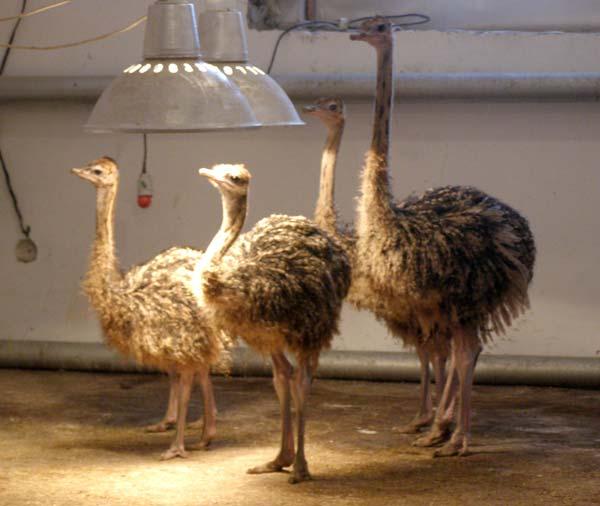 Птицы внутри помещения