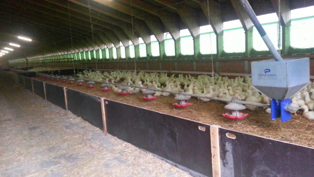Ферма утиная