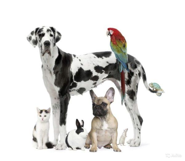 Животные зоомагазина