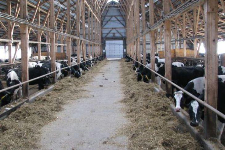 Грант на строительство фермы