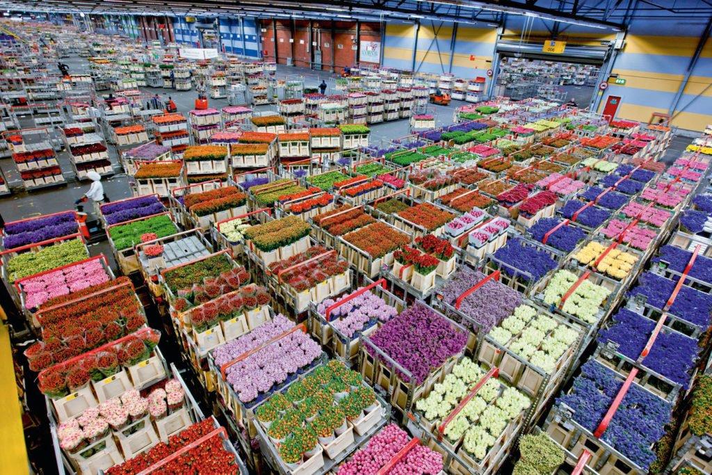 Изображение - С чего начать цветочный бизнес cvetochnyj-biznes