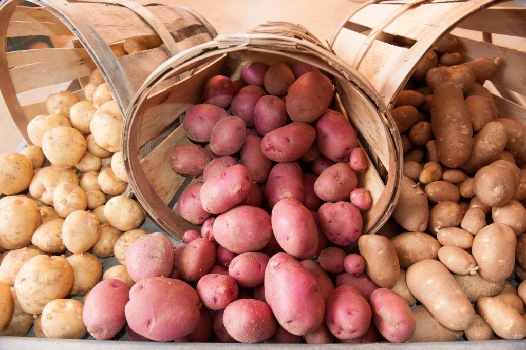 Картошка разных сортов
