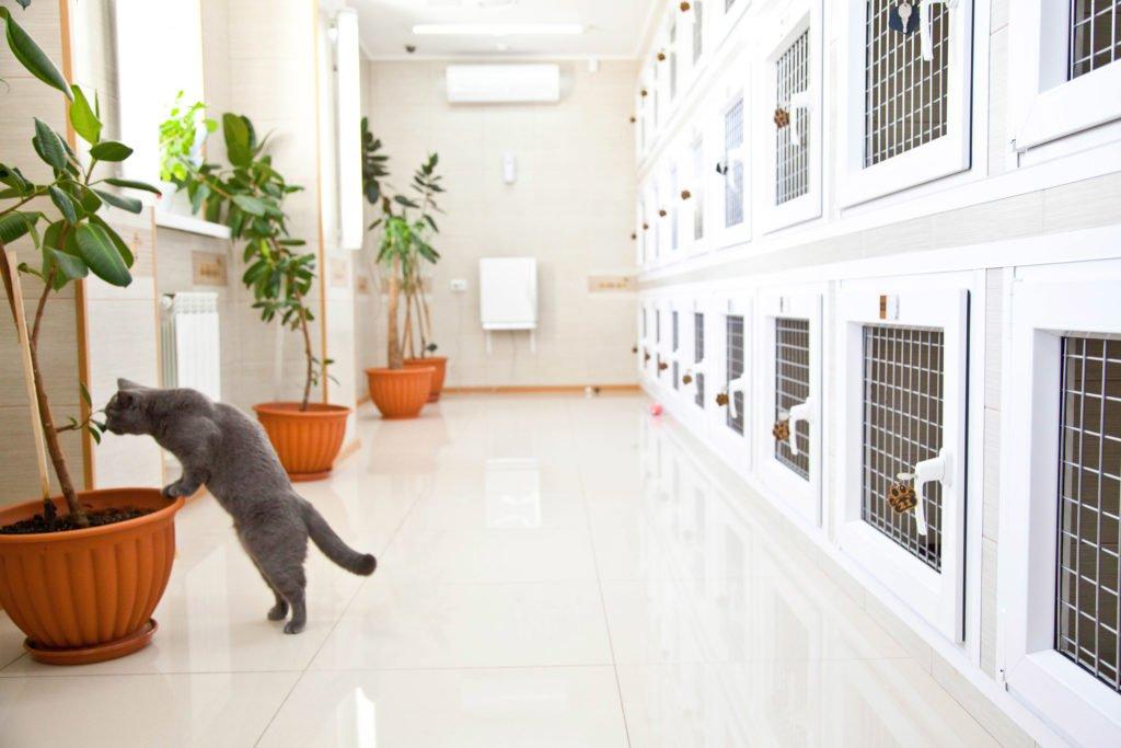 Кошка в гостинице
