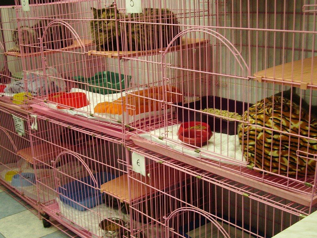 Клетки с животными
