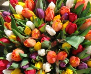 Изображение - С чего начать цветочный бизнес tulip2-e1488125744744-320x260